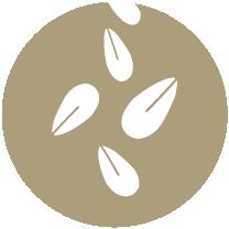 SEMENTES DE SÉSAMO e produtos à base de sementes de sésamo.