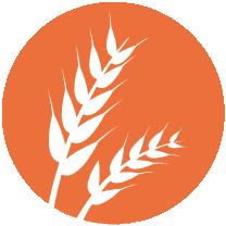 GLUTEN- Cereais que contêm glúten (nomeadamente trigo, centeio, cevada, aveia, espelta, kamut ou as suas estirpes hibridizadas) e produtos àbase destes cereais.