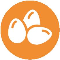 OVOSe produtos à base de ovos.